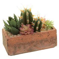 Kaktus in Schale