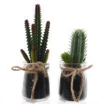 Kaktus im Glastopf